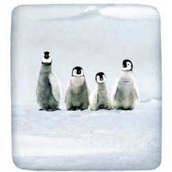 Fitted Sheet Bassetti La Natura Penguins