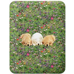Fitted Sheet La Natura Bassetti Golden Retriever Pups On The Meadow