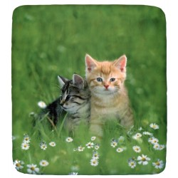 Fitted Sheet Bassetti La Natura Kittens