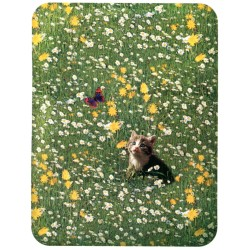 Fitted Sheet La Natura Bassetti Butterfly And Cat V1